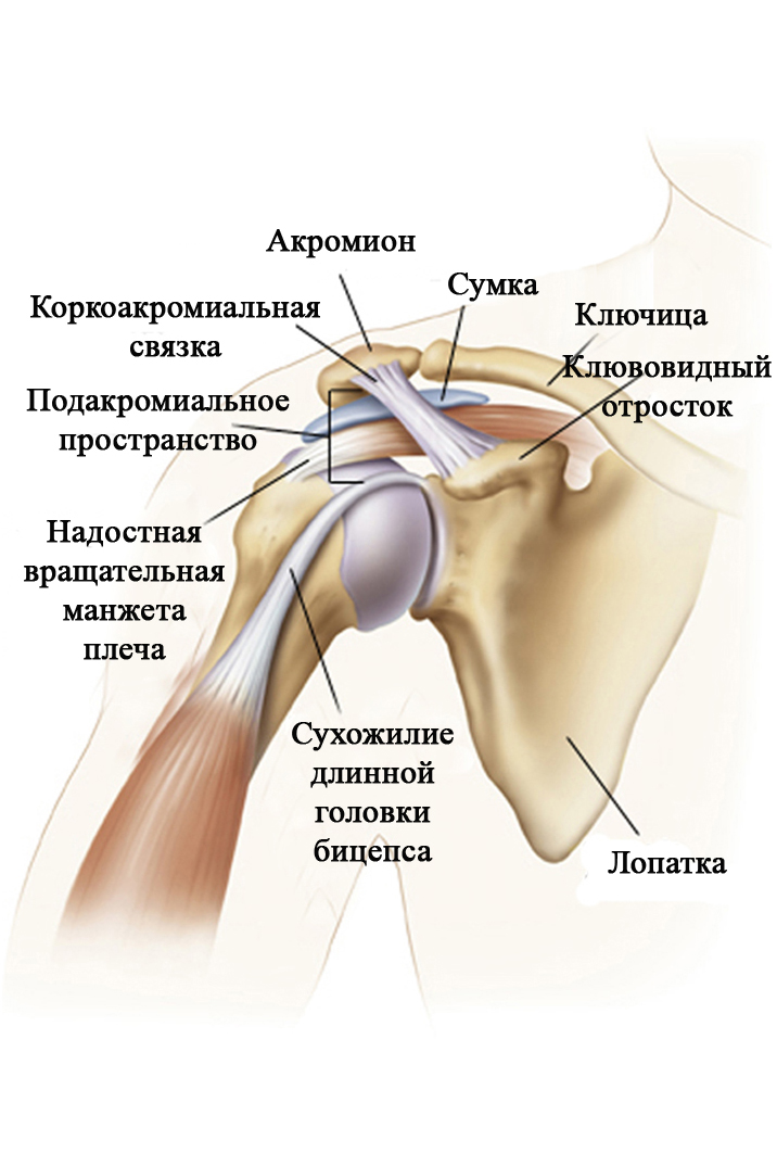 Покалывание в плечевом суставе ограничители суставов купить москва
